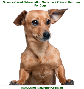 Meme for Dog Naturopath - 1